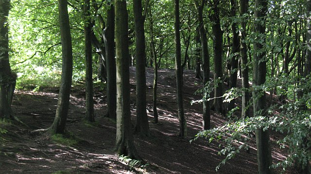 Buckden Woods, Richard Webb, Wikimedia Commons