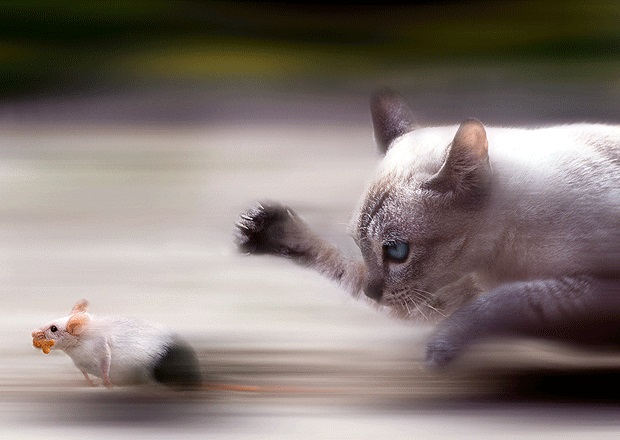 catsrats