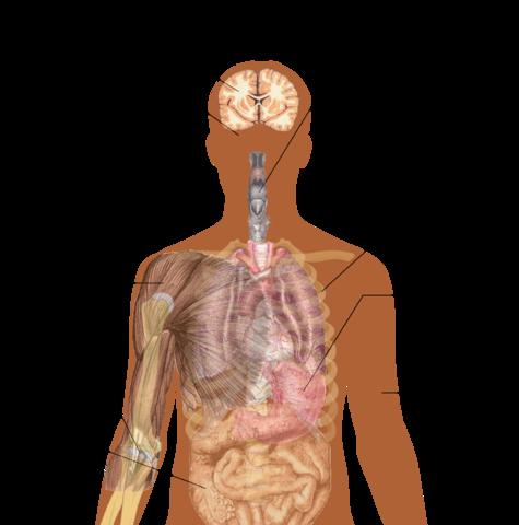 Symptoms_of_ebola-CDC-wikipedia